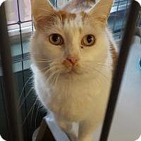 Adopt A Pet :: Enstein - Raritan, NJ