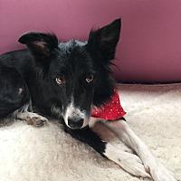 Adopt A Pet :: Libby - Allen, TX