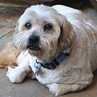Adopt A Pet :: Gordon - Bedminster, NJ