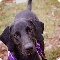 Adopt A Pet :: Frankie (SPONSORED) - Springfield, MO