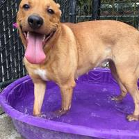 Adopt A Pet :: Prescilla - Philadelphia, PA