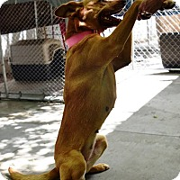 Adopt A Pet :: Yoko - Kalamazoo, MI