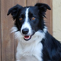 Adopt A Pet :: Keema - 32 pounds - Los Angeles, CA