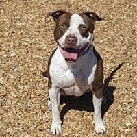 Adopt A Pet :: Rex - 27959 - Petaluma, CA
