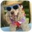 Photo 1 - Cocker Spaniel Dog for adoption in Sugarland, Texas - Blitz