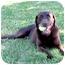 Photo 3 - Labrador Retriever Mix Dog for adoption in Sacramento, California - Kaylee SUPER URGENT