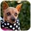 Photo 1 - Miniature Pinscher Dog for adoption in Woodstock, Georgia - Daisy