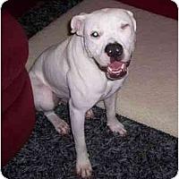 Adopt A Pet :: Roadie - Savannah, GA