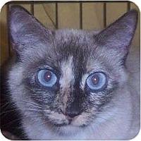 Adopt A Pet :: Magdalyn - Andover, KS