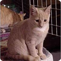 Adopt A Pet :: Lily - Chesapeake, VA