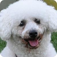 Adopt A Pet :: Isabella - La Costa, CA