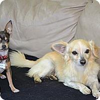 Adopt A Pet :: Eli- I am loyal and Easy :-) - Redondo Beach, CA