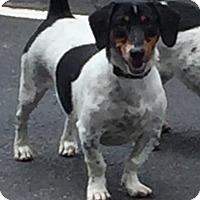 Adopt A Pet :: Rico - Jupiter, FL