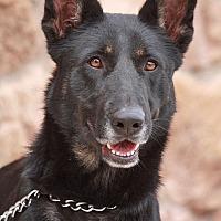 Adopt A Pet :: Lola von Lippstadt - Los Angeles, CA