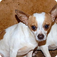 Adopt A Pet :: SAUL - Anderson, SC