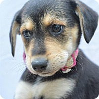 Adopt A Pet :: Kelsie - Danbury, CT