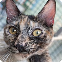 Adopt A Pet :: Yesta - Redwood City, CA
