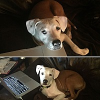 Adopt A Pet :: Spencer - Huntsville, AL