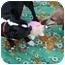 Photo 4 - Dachshund Dog for adoption in Killingworth, Connecticut - Nala