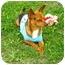 Photo 4 - Chihuahua Mix Dog for adoption in Corpus Christi, Texas - C.B.