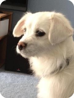Terrier (Unknown Type, Small)/Terrier (Unknown Type, Medium) Mix Dog for adoption in Chilliwack, British Columbia - ANNIE