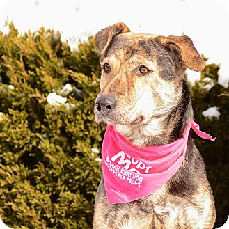 Shepherd (Unknown Type)/Mountain Cur Mix Dog for adoption in Grand Rapids, Michigan - Divina