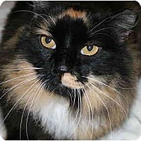 Adopt A Pet :: Charlotte - Bristol, RI