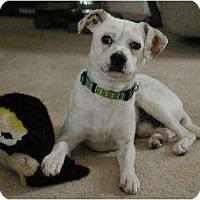Adopt A Pet :: Tucker - Sacramento, CA