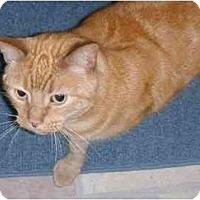 Adopt A Pet :: Remy - Jenkintown, PA