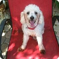 Adopt A Pet :: HARVEY - Melbourne, FL