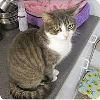Adopt A Pet :: Violet - Pascoag, RI