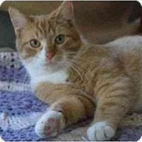 Adopt A Pet :: Butch - Vails Gate, NY