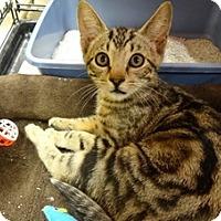 Adopt A Pet :: JAKE - Diamond Bar, CA