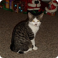 Adopt A Pet :: Grimm - Douglas, ON