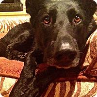 Adopt A Pet :: Derby*Adoption Pending* - Mill Creek, WA
