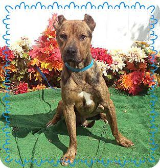 Boxer/Shepherd (Unknown Type) Mix Dog for adoption in Marietta, Georgia - YANI - adopted @ off-site