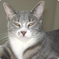 Adopt A Pet :: Veruca - Miami, FL