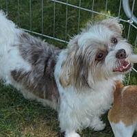 Adopt A Pet :: Gidget - N. Babylon, NY