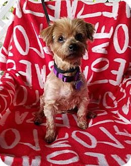 Terrier (Unknown Type, Small) Mix Dog for adoption in Danbury, Connecticut - Ireland