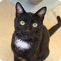 Adopt A Pet :: George - Naperville, IL