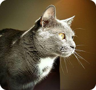 Domestic Shorthair Cat for adoption in Winchendon, Massachusetts - Jasmine