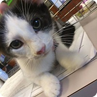 Adopt A Pet :: timmy - Henderson, KY