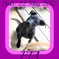 Adopt A Pet :: FIA - New Brunswick, NJ