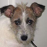 Adopt A Pet :: Leslie - Germantown, MD