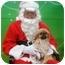 Photo 2 - Pekingese Mix Dog for adoption in Duluth, Georgia - Cookie
