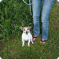 Adopt A Pet :: LEXI - Wisconsin Dells, WI