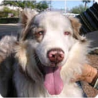Adopt A Pet :: Mocha - Mesa, AZ