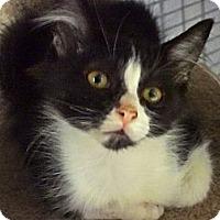 Adopt A Pet :: Rolex - Escondido, CA