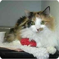 Adopt A Pet :: RUNNING OUT OF TIME!: Bianca - Quincy, MA