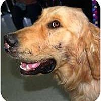 Adopt A Pet :: Matthew - Scottsdale, AZ